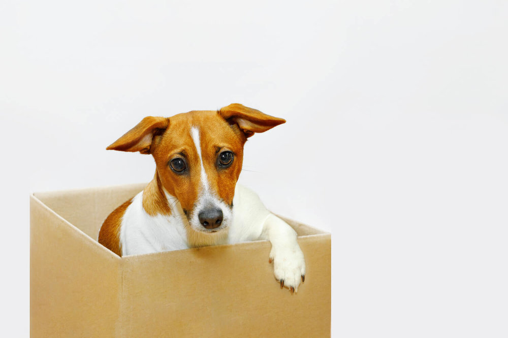 dog in box - moving company scams