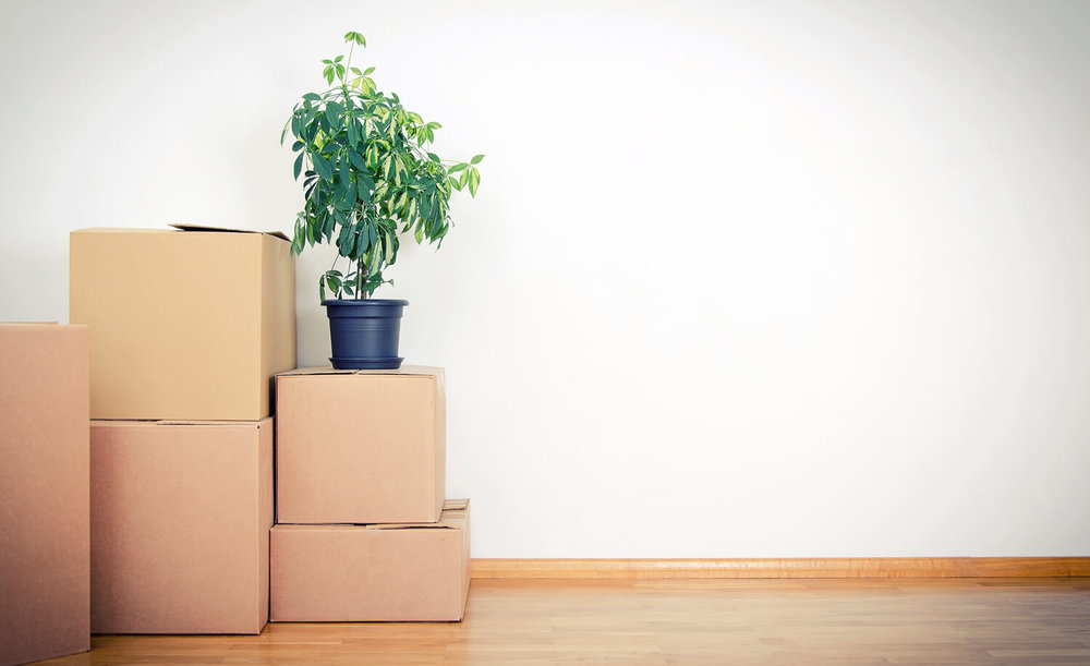 boxes and plant - what not to pack when moving