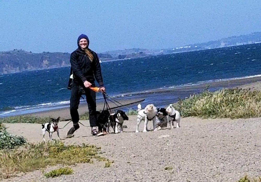 ella-walking-dogs_meet-updater-ella-creedy-hall.JPG