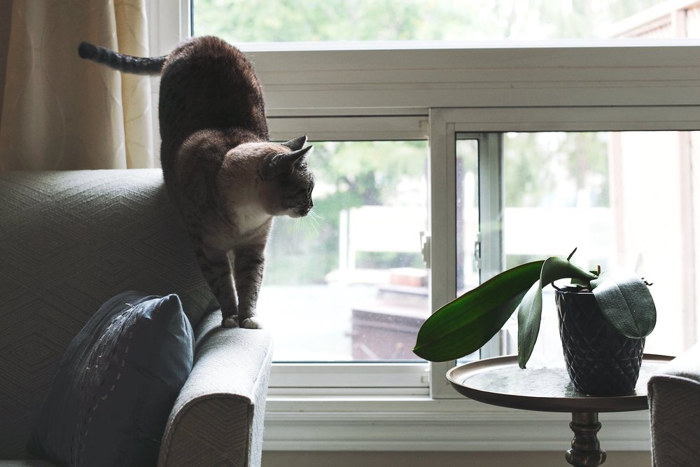 cat-sofa_best-diy-home-security-system.jpg