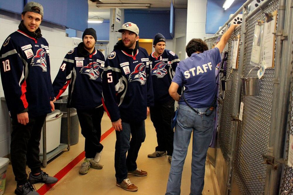 Left to Right: Colin Jacobs, Justin Bernhardt, Tyler Currier, and Chris Langkow listen to instruction before greeting the dogs at the SPCA.