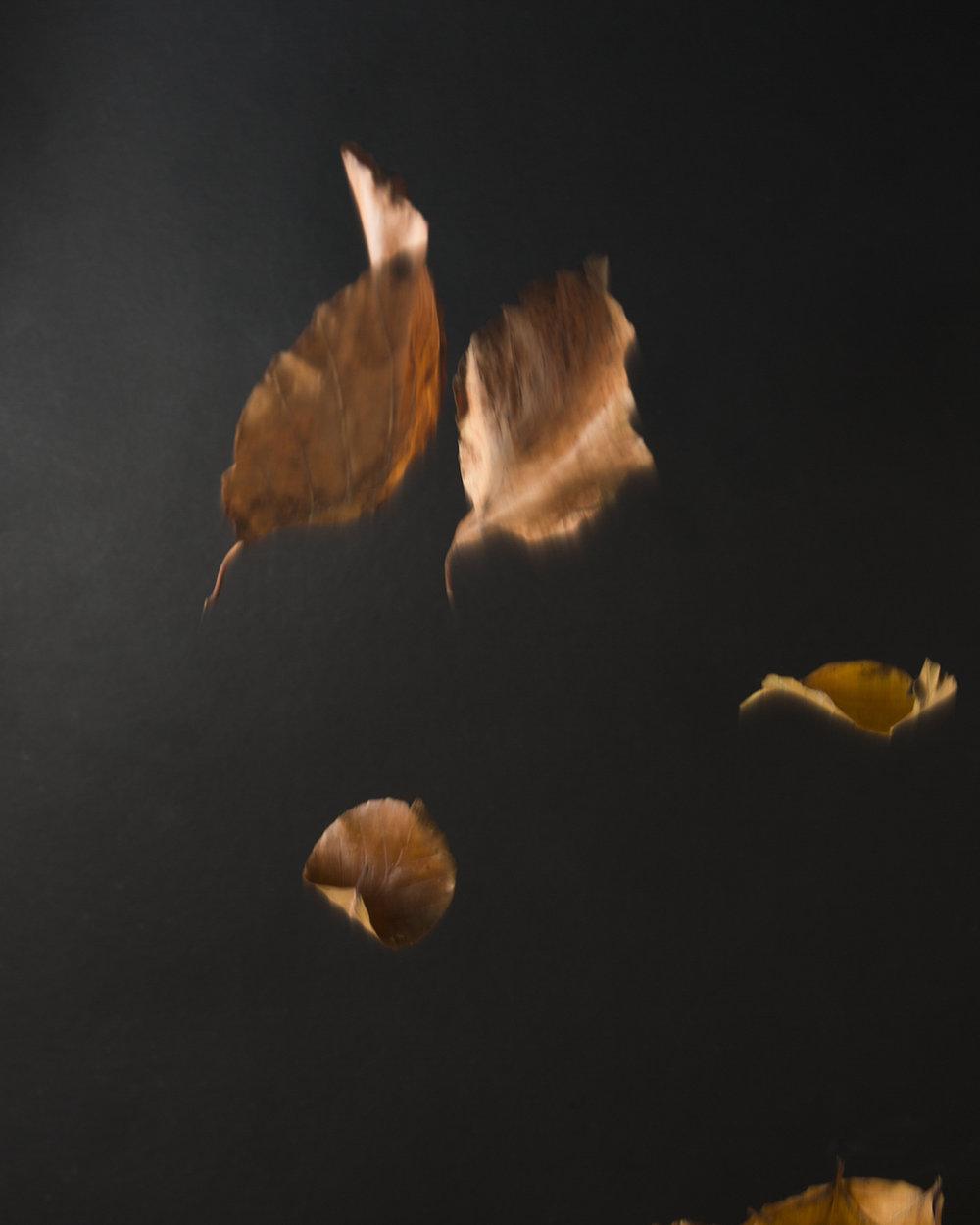 Fallling leaves ii.jpg