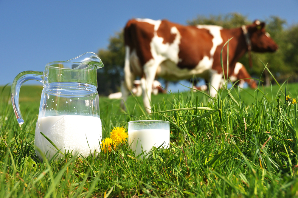 What's the Deal with Milk, Anyway? — The Sweat Life