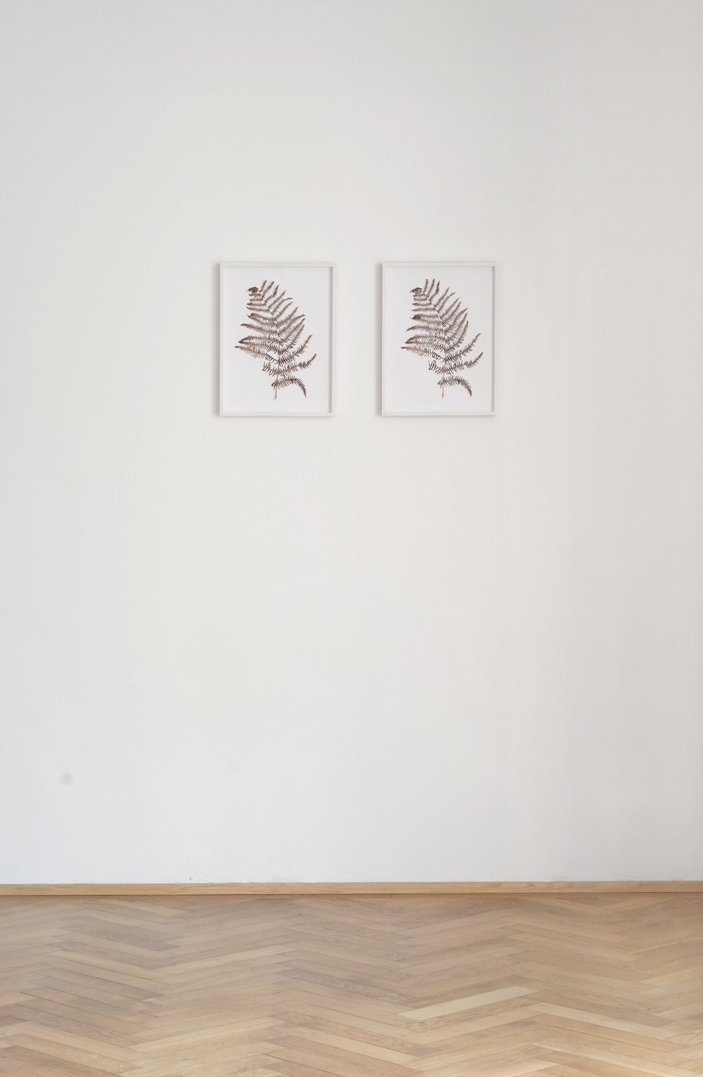Alex Grein, Farnblatt (two parts), 2015, Cutout InkJet Print, 30 x 40 cm each