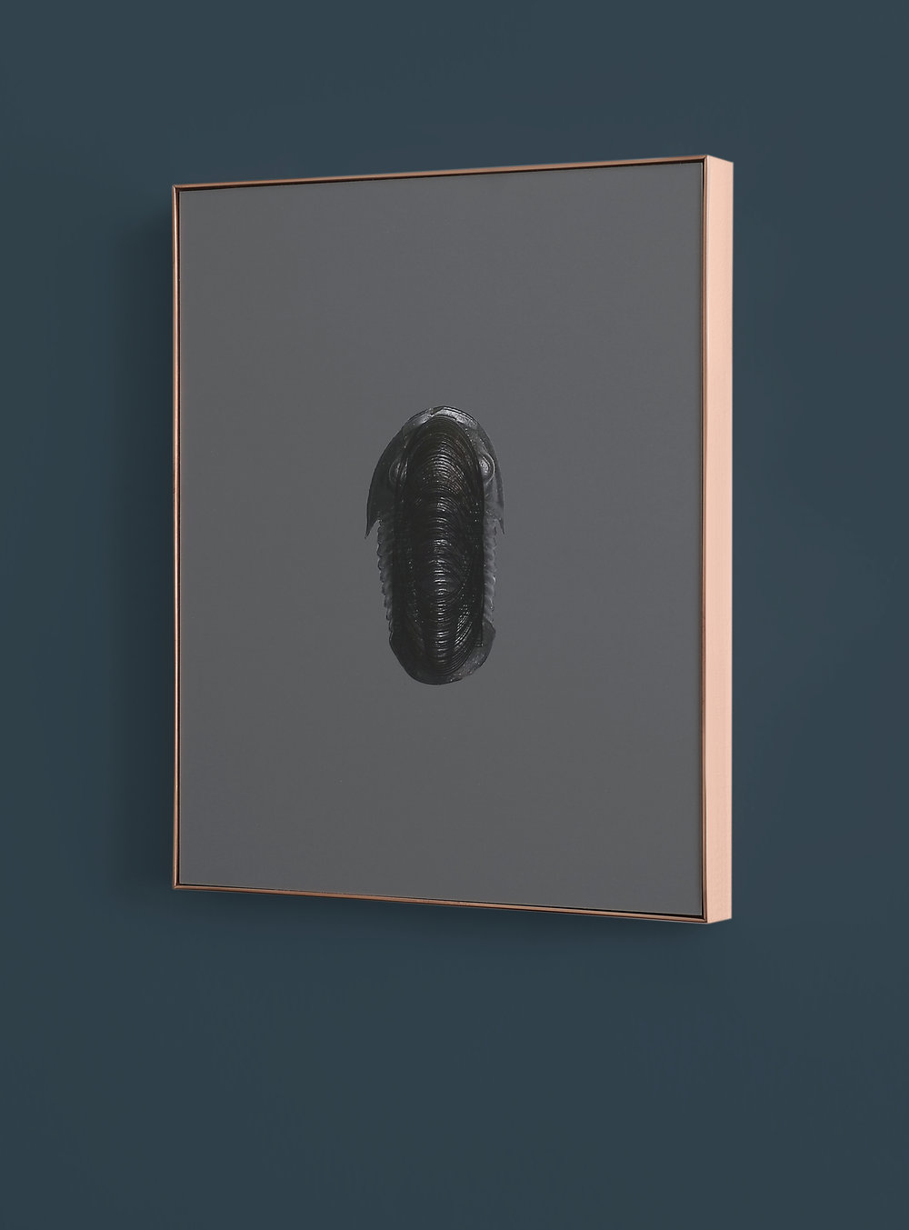 AnnaVogel, Trilobit #09, 2015, ink on pigment print, copper frame, 24 x 19 cm