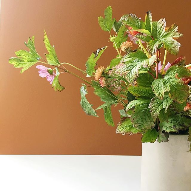 This morning had the tiniest feeling of fall. #cantwait 🍂 . . . #cosmosflower #falliscoming #flowers #floraldesign #floralarrangement #flowerchild #flowerseveryday #fallfoliage #celebrate #itsbeenawhile #imaflorist #laflorist
