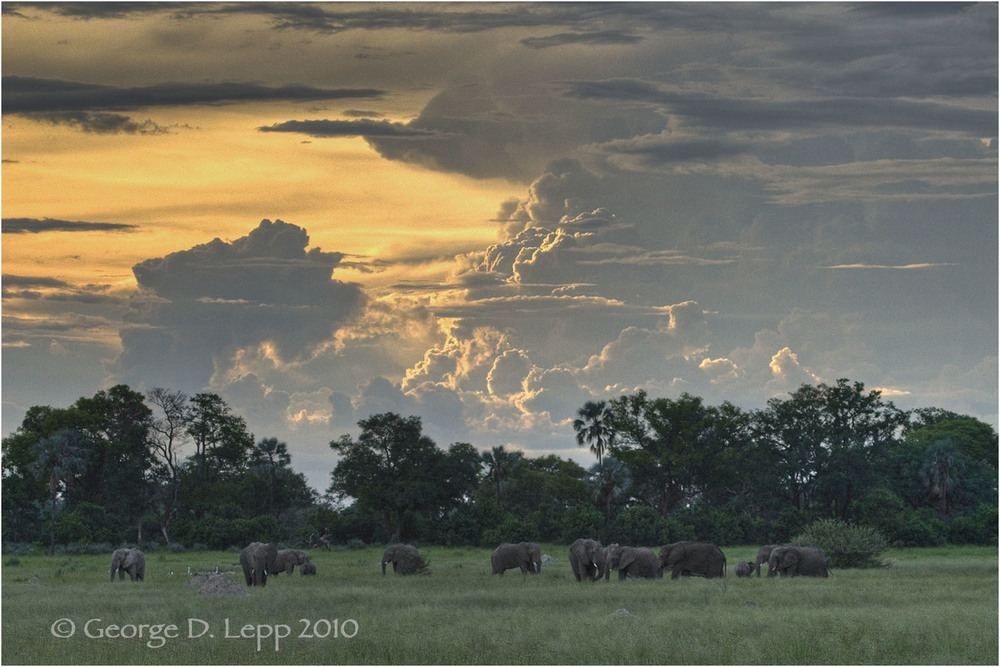 Elephants gather at sunset in Botswana. © George D. Lepp 2010  M-EP-AF-0048