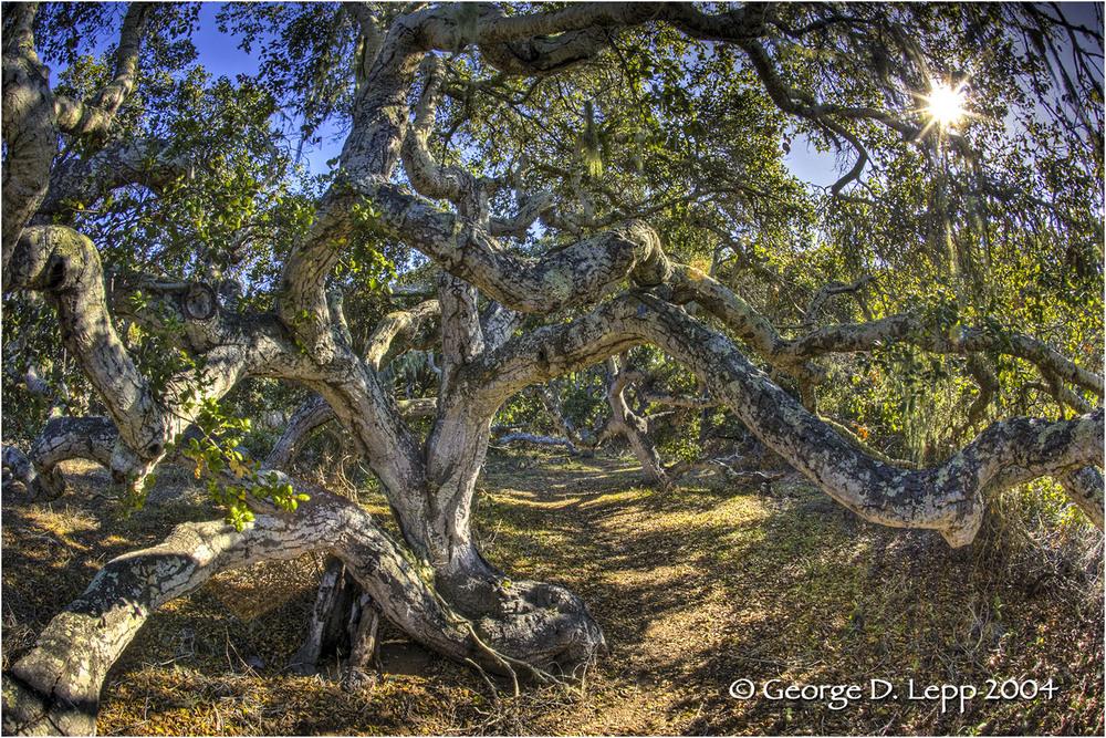 Los Osos Oaks State Preserve, CA.    © George D. Lepp 2004 LC-CC-LO-0007