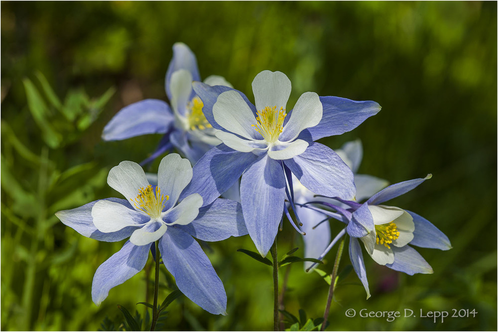 Columbine, Colorado. PW-CO-0008