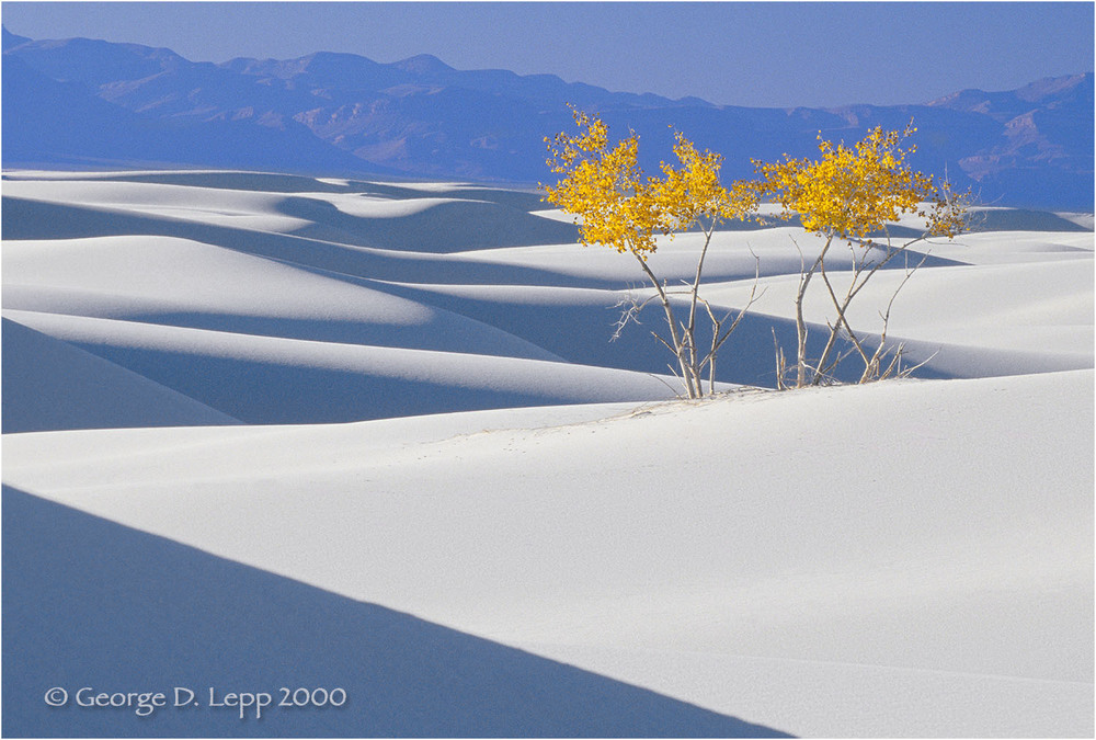 Cottonwoods, White Sands, New Mexico. © George D. Lepp 2000  L-NM-WH-0004