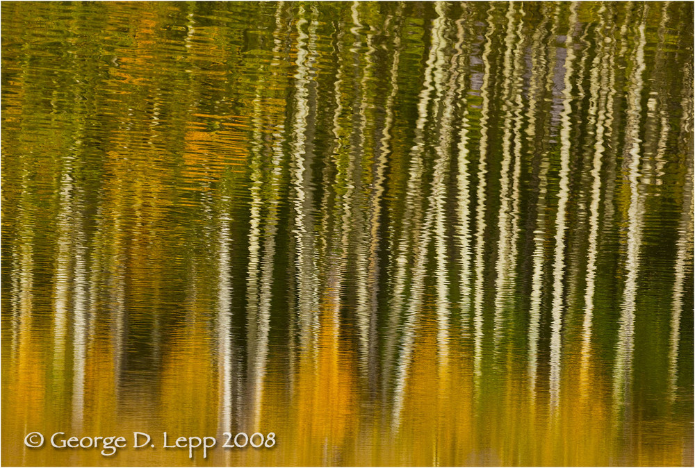 Aspen reflections, Colorado. © George D. Lepp 2008  L-CO-OW-0012