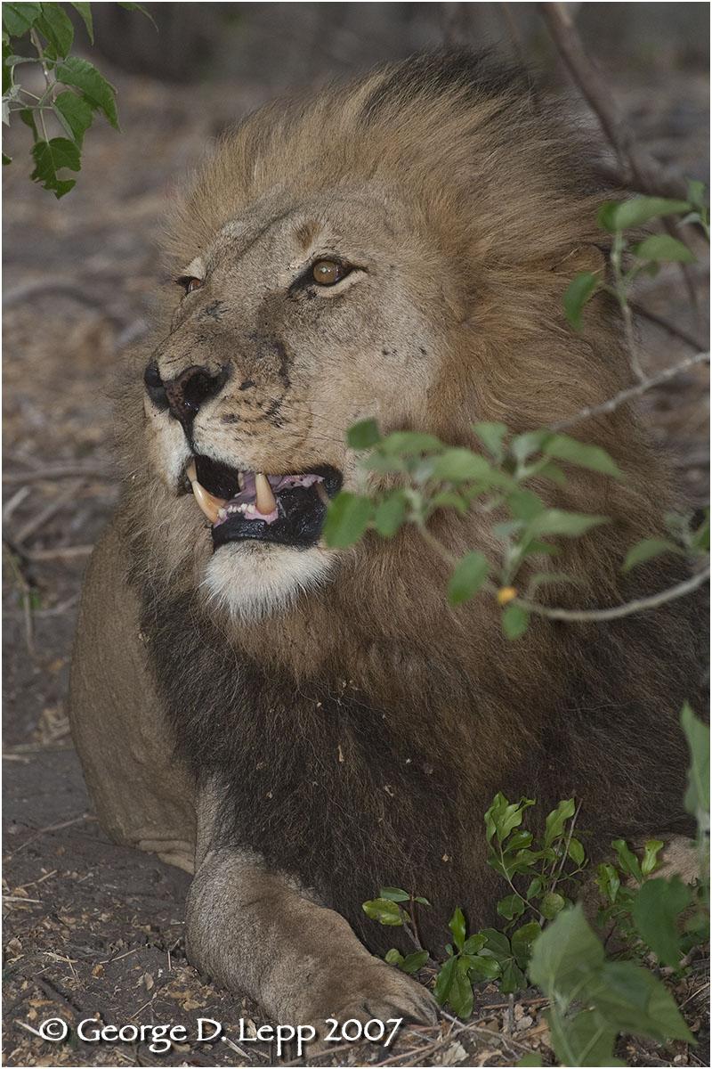 Duba Boy, Botswana. George D. Lepp 2007 M-CA-LI-0055