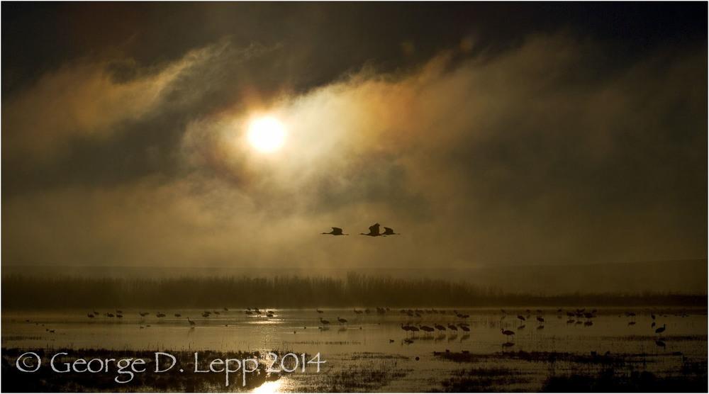 Sandhill Cranes, Bosque del Apache, NM. © George D. Lepp 2014 B-CR-SA-0022
