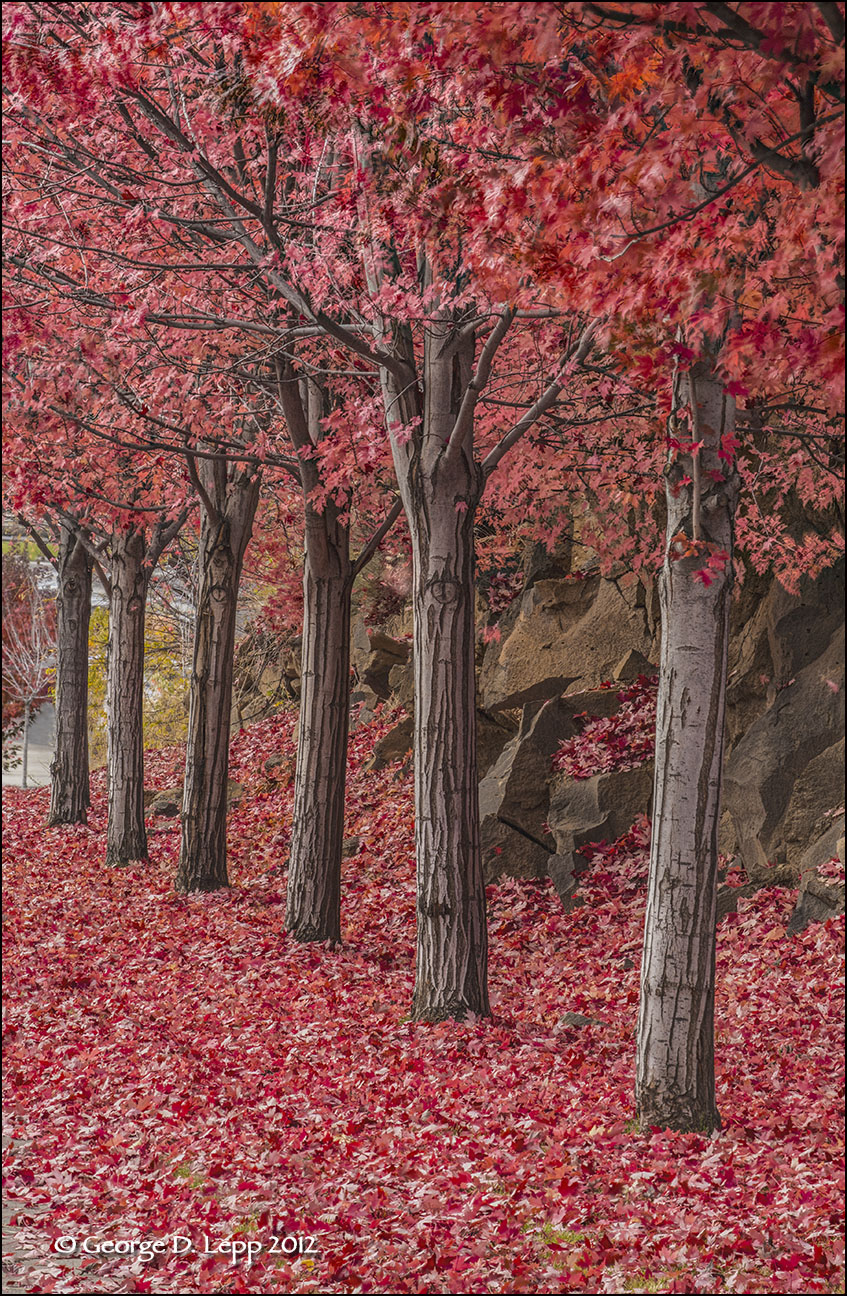 Fall colors along a Bend, OR, street. © George D. Lepp 2012  LO-CE-BE-0007