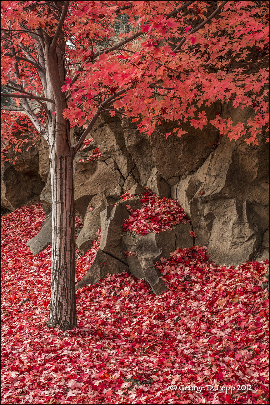 Fall colors along a Bend, OR, street. © George D. Lepp 2012  LO-CE-BE-0011