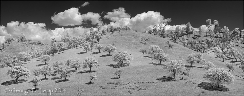 Coastal oaks in the costal foothills, CA. IR. © George D. Lepp 2014  LC-CC-CG-0003