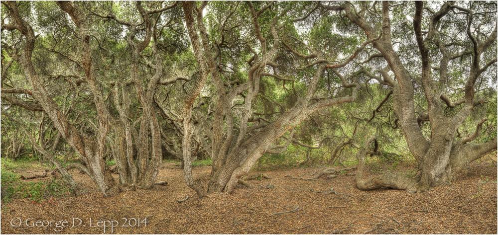 Los Osos Oaks State Preserve, CA.    © George D. Lepp 2004 LC-CC-LO-0009