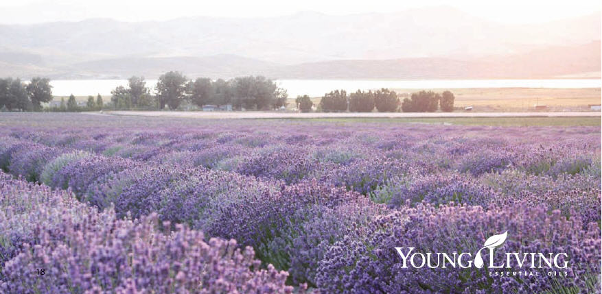 Young Living Lavender field in Utah, Photo Credit: Young Living