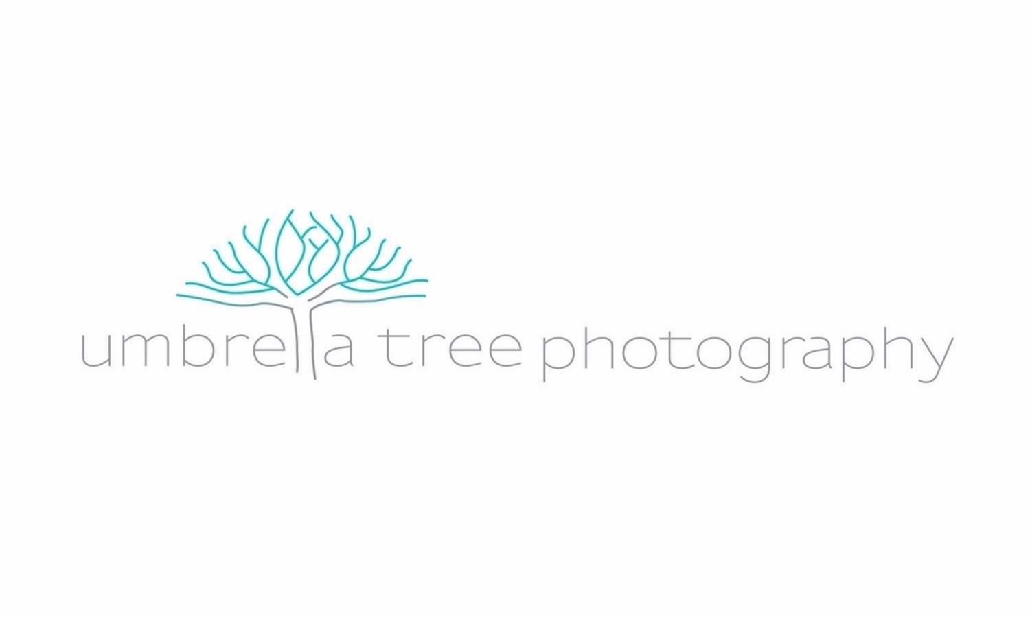 Umbrella Tree Photography