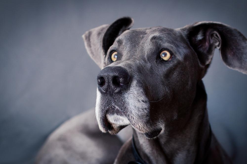 Dogs_Site_26.JPG