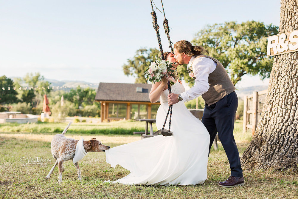 Bride and groom portrait on a swing at Lavender Oaks Ranch with dog pulling on wedding dress.