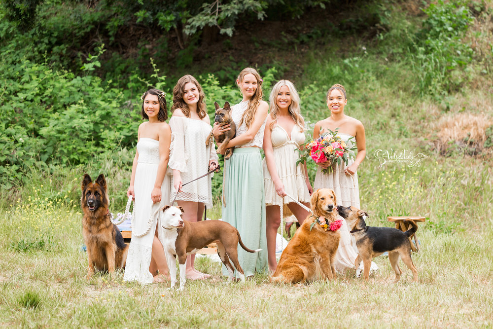 Brides with dogs in wedding