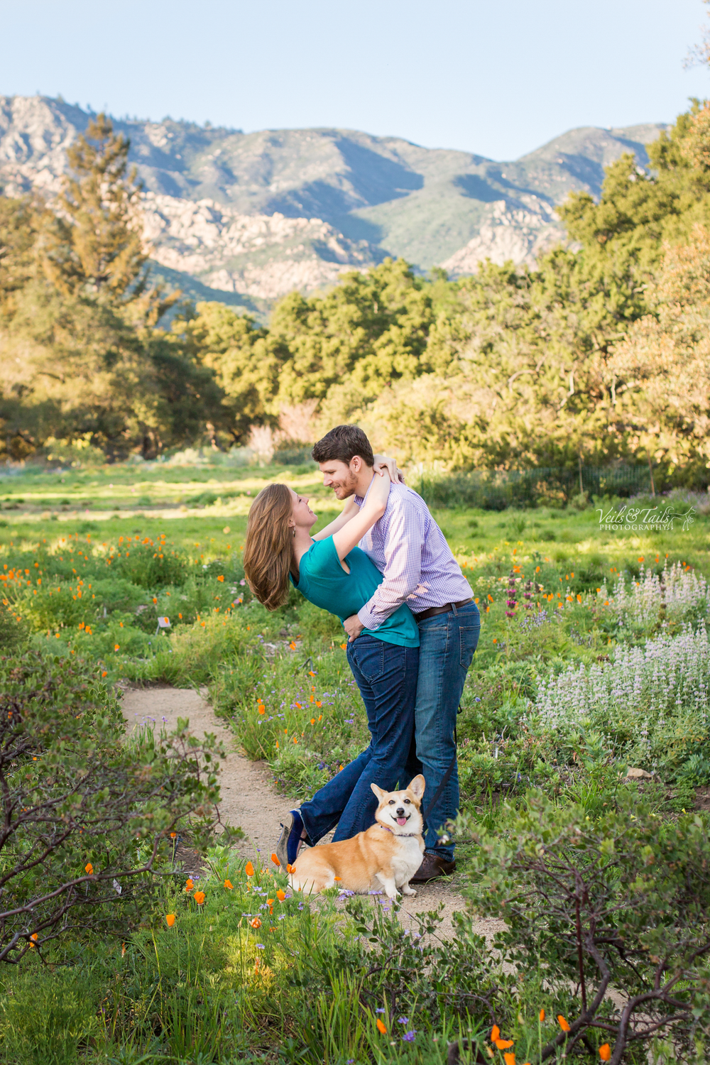 engagement shoot in california poppies