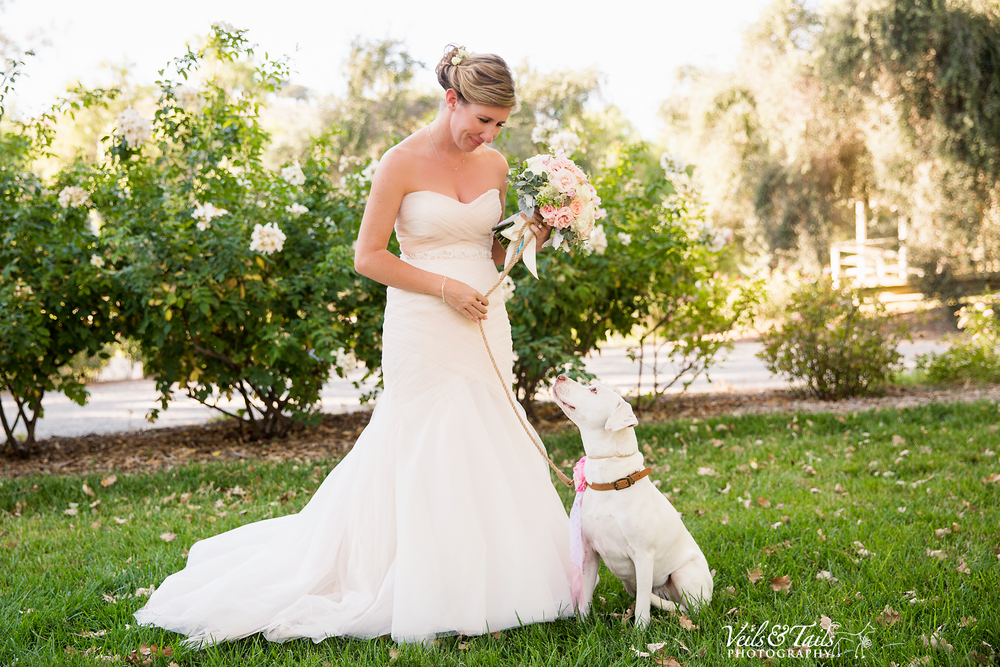 aptos california wedding photographer