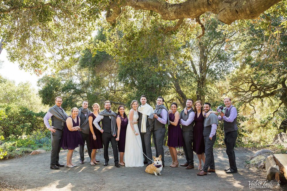 wedding with dogs in them