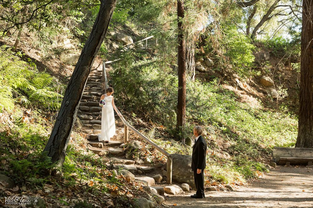 first look in redwood trees