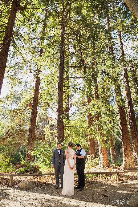 Red wood trees wedding