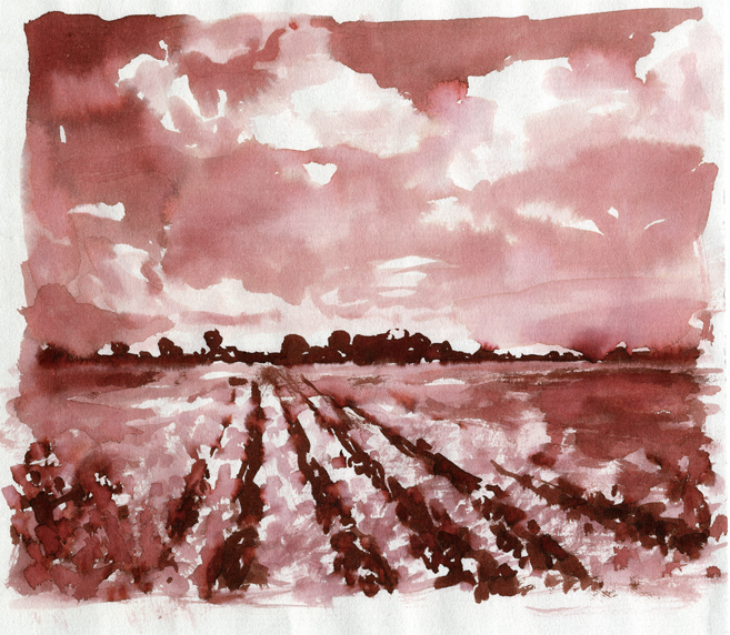 Cotton field pen and ink.jpg