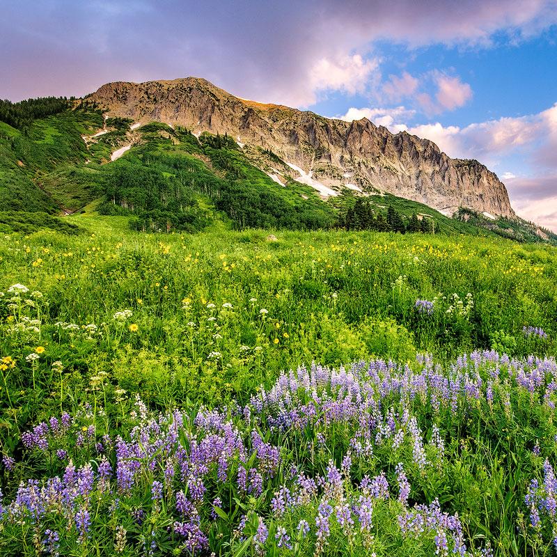 Colorado Wildflowers - July 20-28, 2018