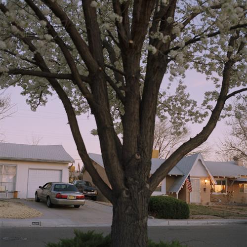 1_Deveney_Pear_Tree.jpg