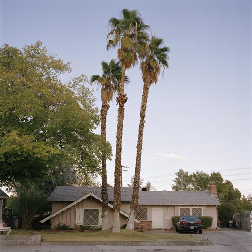 21_Deveney_Palm trees.jpg