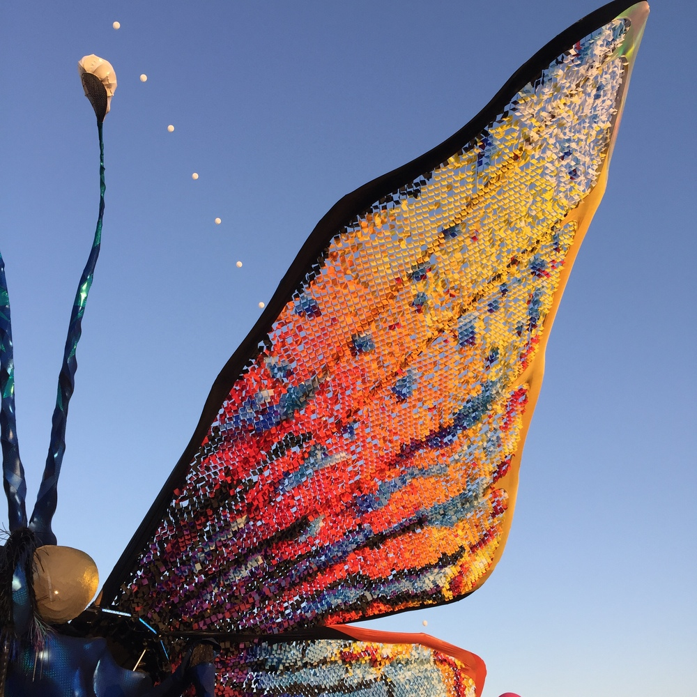 the caterpillar turned in to a beautiful butterfly on day 2