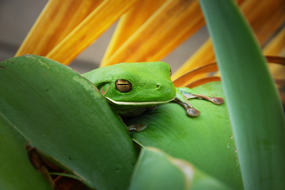56 frog1 grade.jpg
