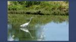 Wetlands Thumbnail 2-Thumbnail.jpg
