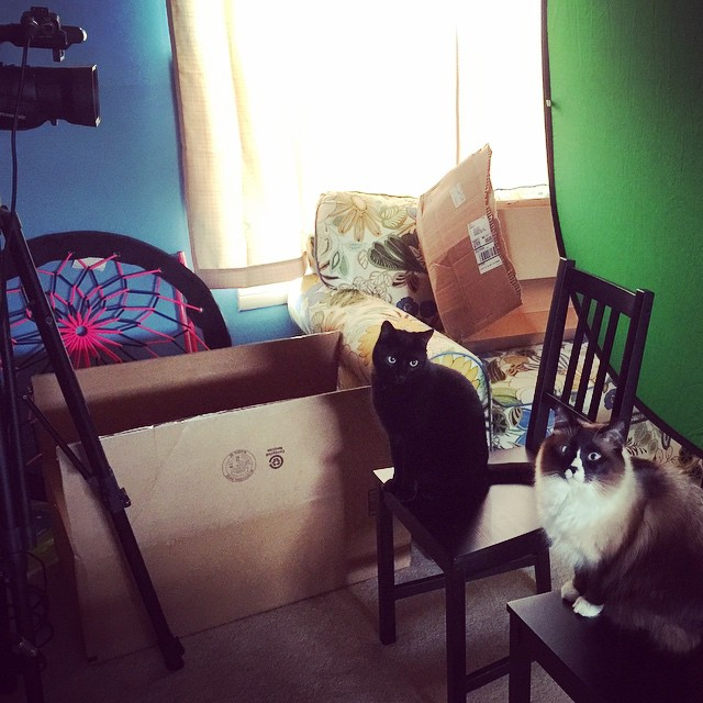 I have some new talent for today's shoot. My casting agent is knocking it out of the park! #cat #studio