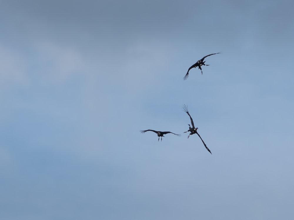 The Condor Aerobatics Team (CAT) lacked finesse.....