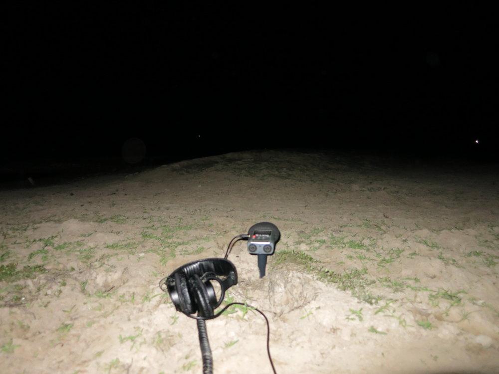 Night Field Recording