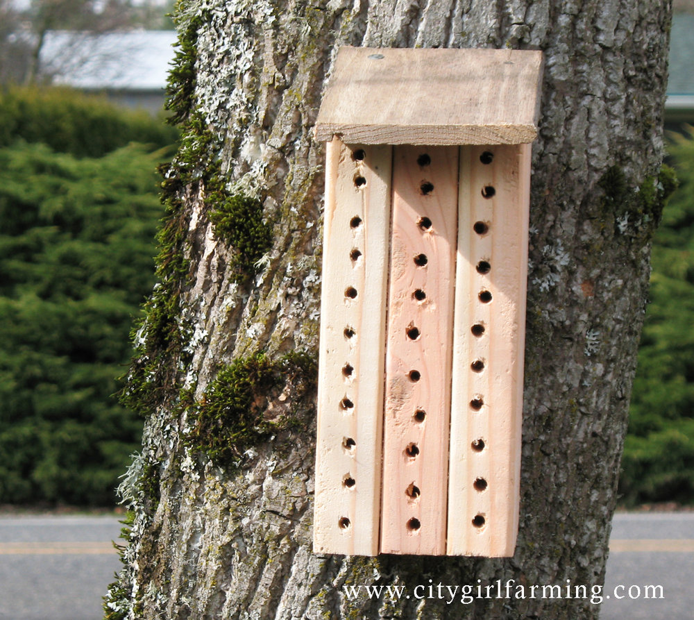 Homemade mason bee house note that this kind is not great (see below)