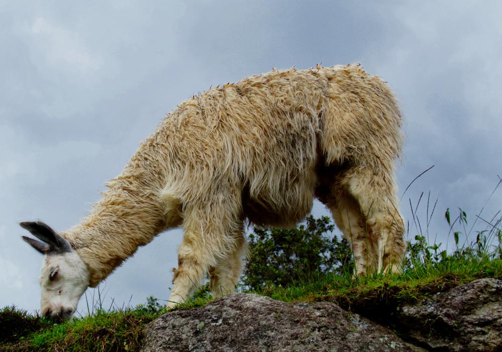 nature photography , vicky good ,#vickygoodphotography #vickygood,peru,
