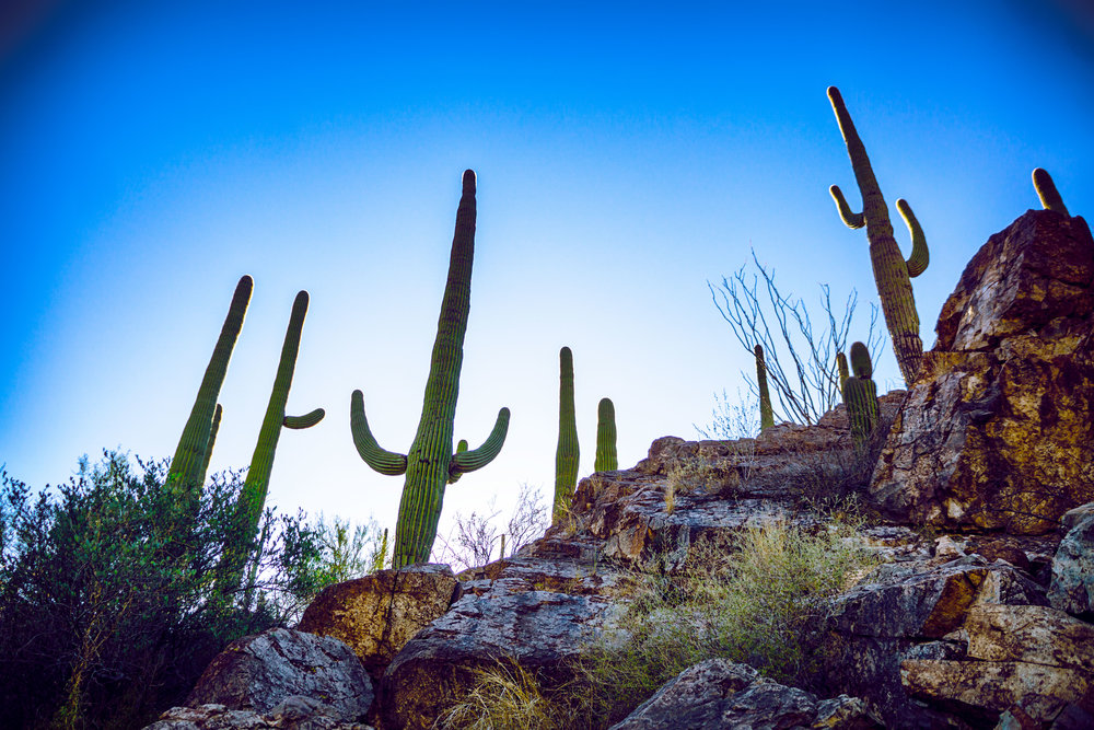 vickygood_photography_nature_saguaro-park14.jpg