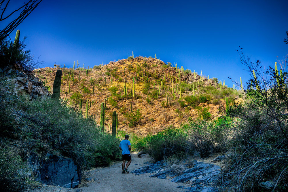 vickygood_photography_nature_saguaro-park7.jpg