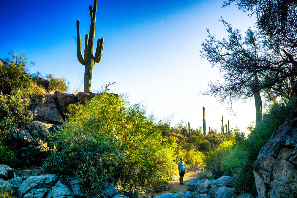 vickygood_photography_nature_saguaro-park9.jpg