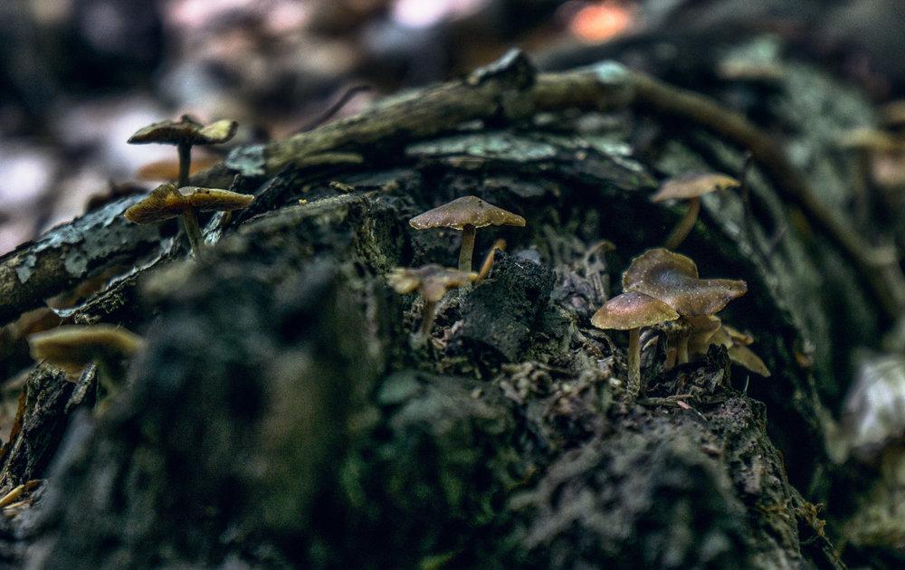 vickygood_photography_nature_mushroom13.jpg