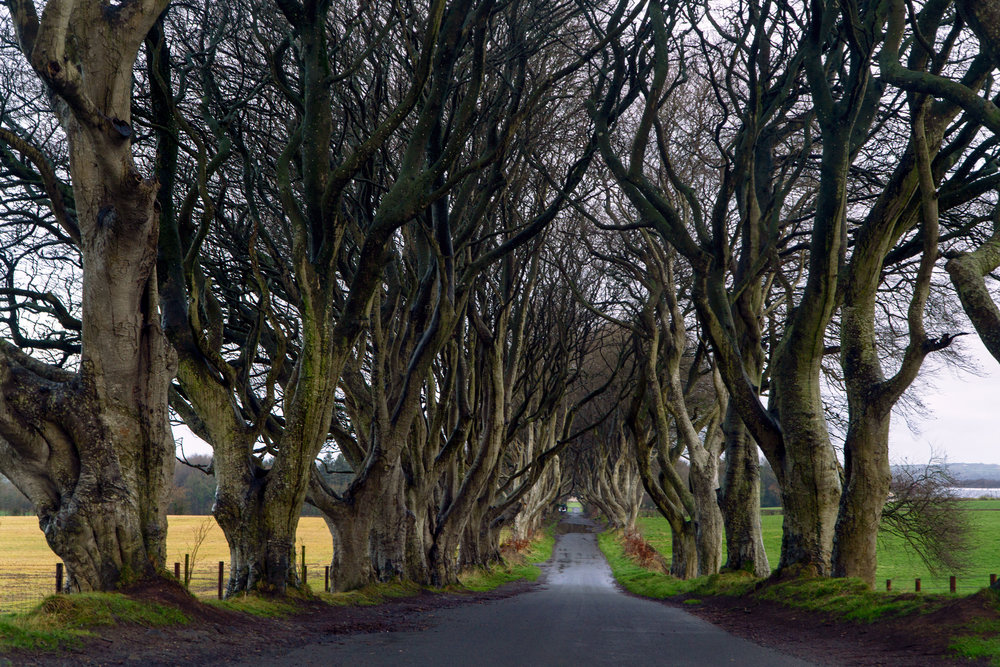 northern_Ireland_the_dark_hedges_vickugood_travel_photography_sm.jpg