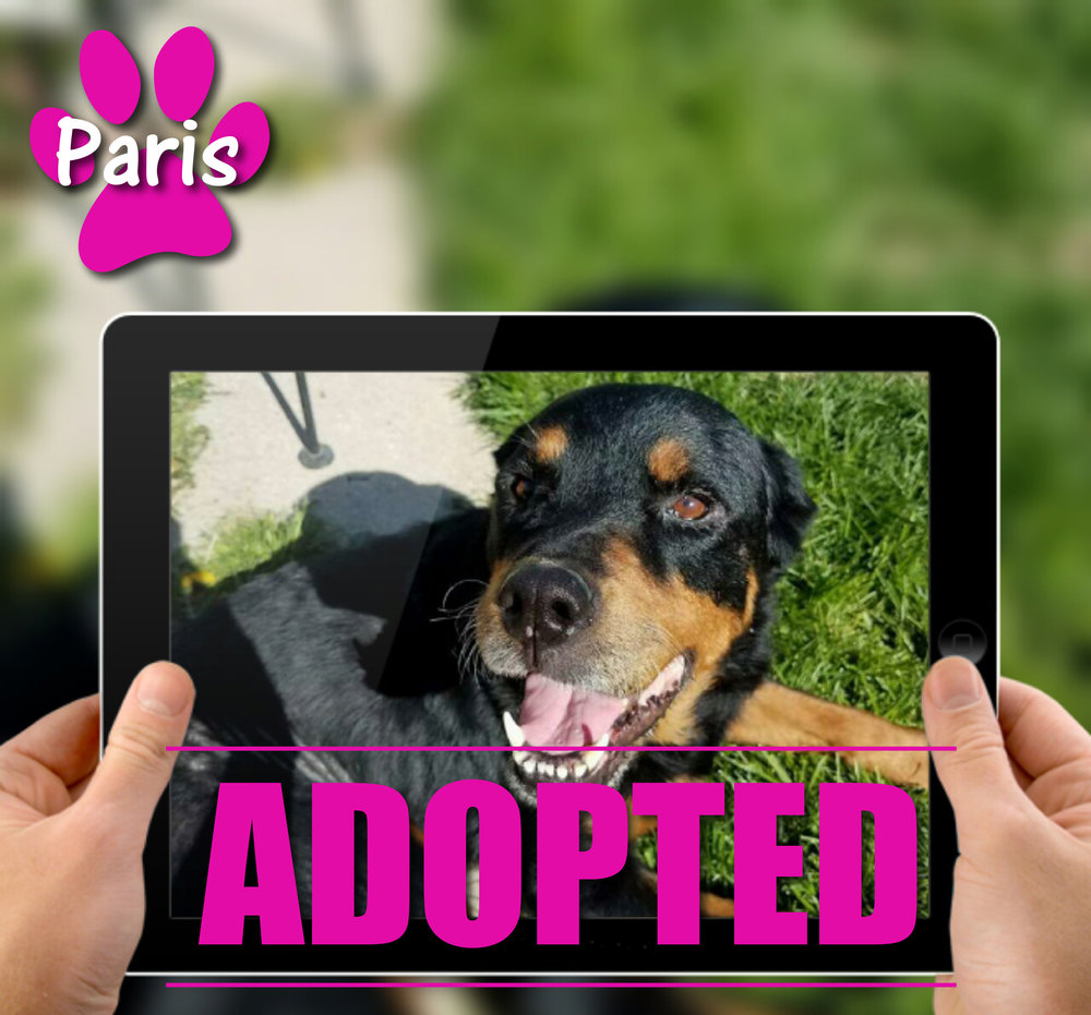 Paris Adopted.jpg