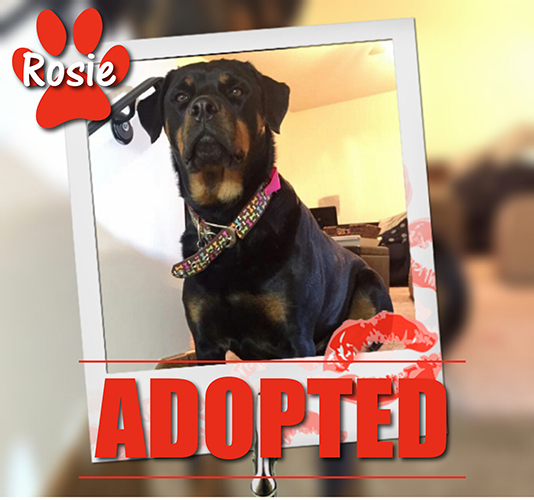 Rosie Adopted June 2017